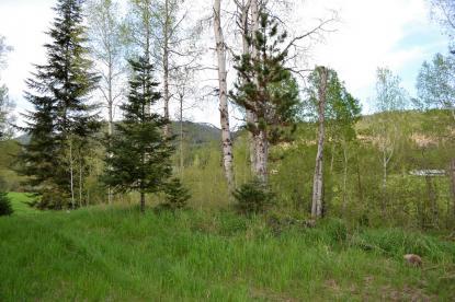Land Listing - Usk, WA - Thumb
