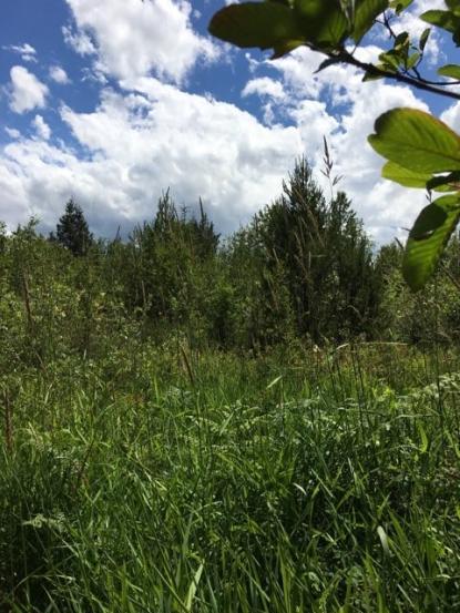Land Listing - Chehalis, WA - Thumb